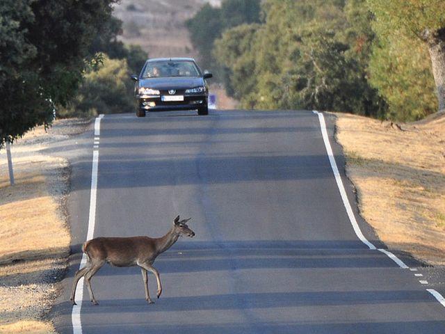 El Tribunal Constitucional valida la reforma de la Ley de Tráfico en materia de accidentes de caza