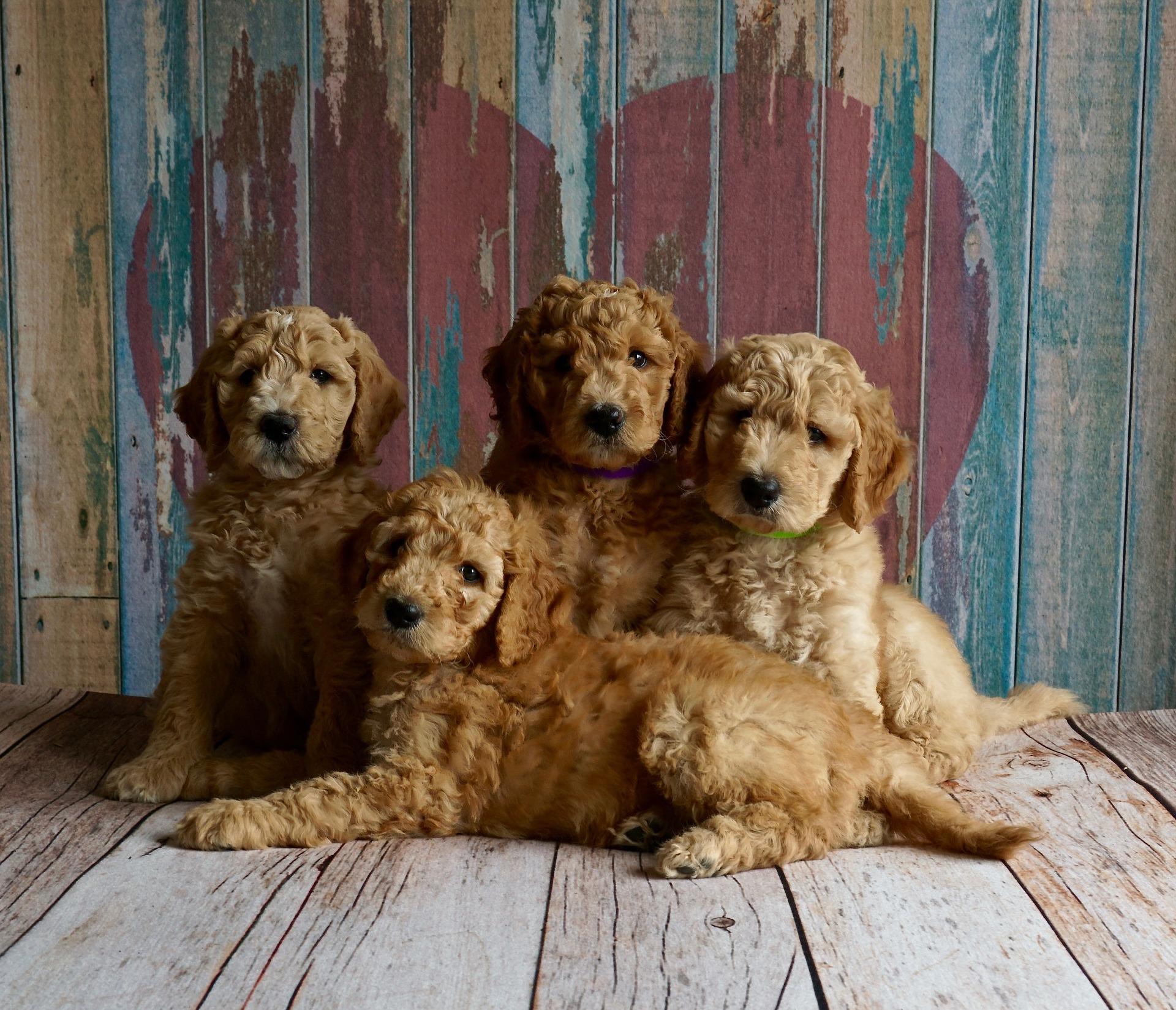 La justicia obliga al cese definitivo e inmediato de actividad de tenencia de varios perros en la vivienda